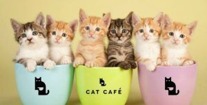 cat cafe in manchester