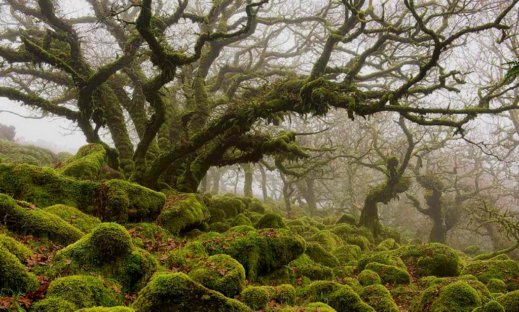 These trees look like they came to us from fairy tales