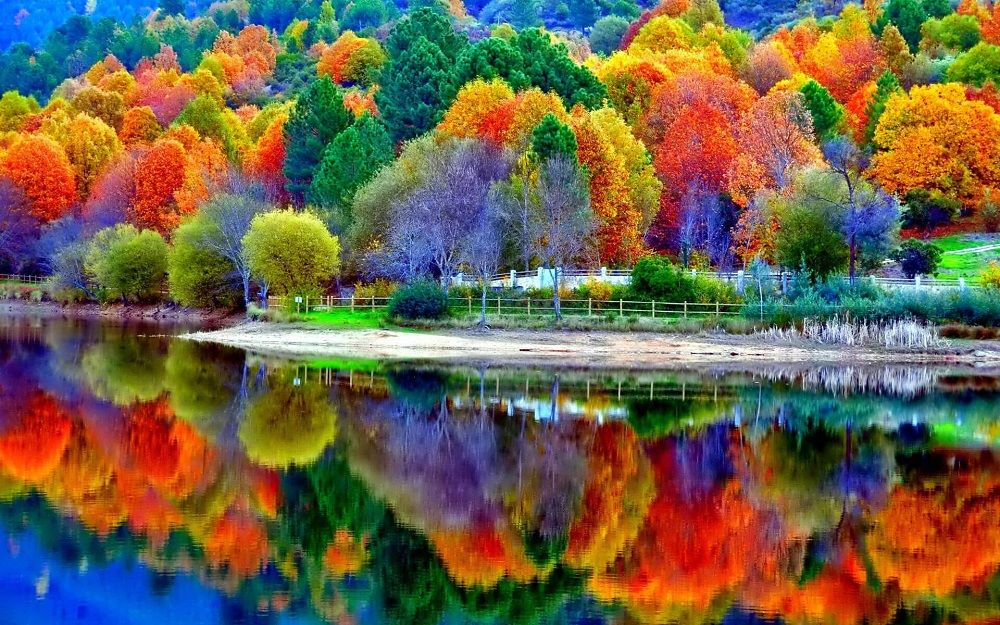 Image result for startonight wall art canvas all colors of forest water reflection, nature usa design for home decor, dual view surprise wall art 23.62 x 35.43 inch 10