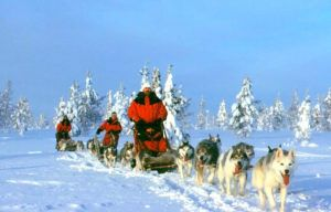 husky-tour-in-finland-1