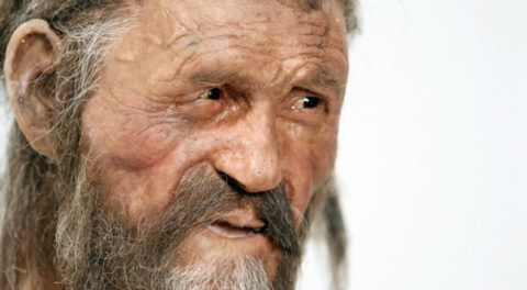 5,300-Year-Old Iceman's Last Meal Was 'Stone Age Bacon'