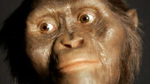 3.18 Million-Year-Old Lucy Spent Much Of Her Time In Trees, New Study Suggests