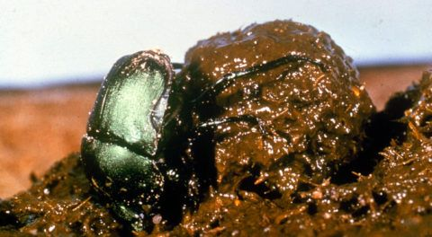 Bizarre and Fascinating Ways Animals Use Poop