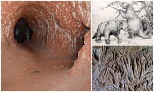 Did You Know About The Mega Tunnels Dug By South American Megafauna?