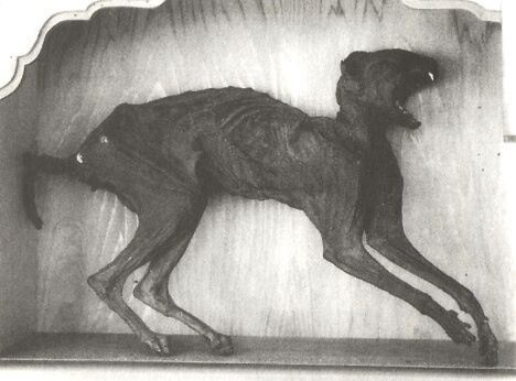 Mysterious Monster Mummies Of Japan