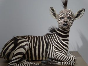10 Rouge Taxidermists Who Turn Animal Corpses Into Art