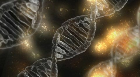 Afterlife? Human Genes Remain Active After We Die