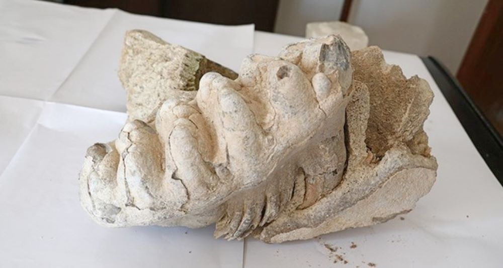 8 Million-Year-Old Mammoth Fossil Found In Central Turkey