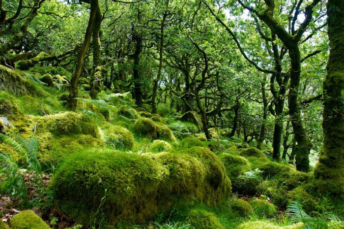 Real Forests That Look Like Fairy Tales5