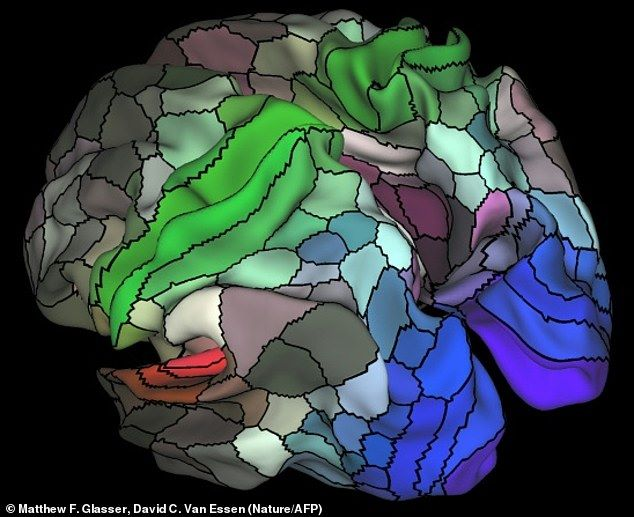 4wclR7wkTo858af0c8b9e3f75b4f-3700008-The_researchers_discovered_that_our_brain_s_cortex_or_outer_mant-m-26_1469045322365