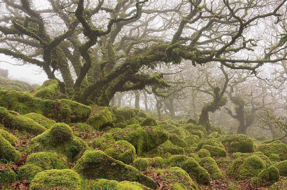 Real Forests That Look Like Fairy Tales 4