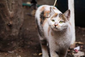 Scientists Find Possible Cancer Cure in Cat Poo