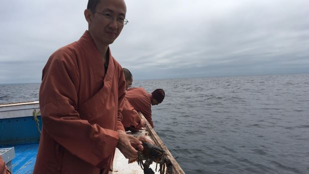 Buddhist Monks Bought 600 Lbs Of Lobster To Release Them Back To Ocean