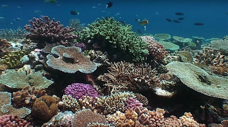 healthy-coral-reef-fiji (1)