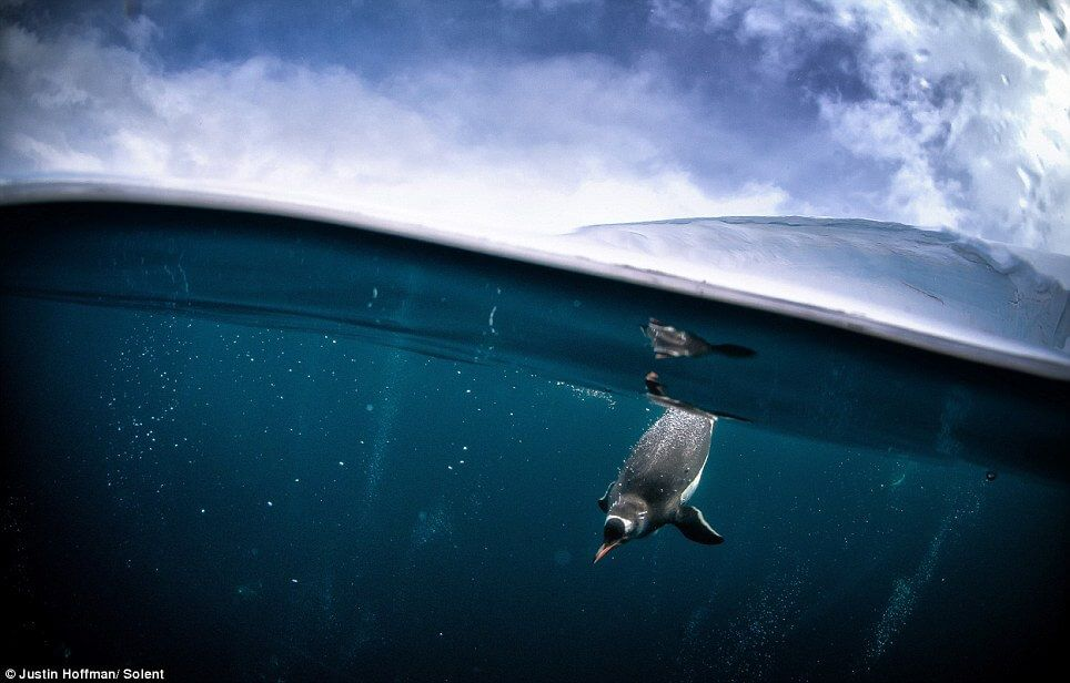 diving with penguins and seals