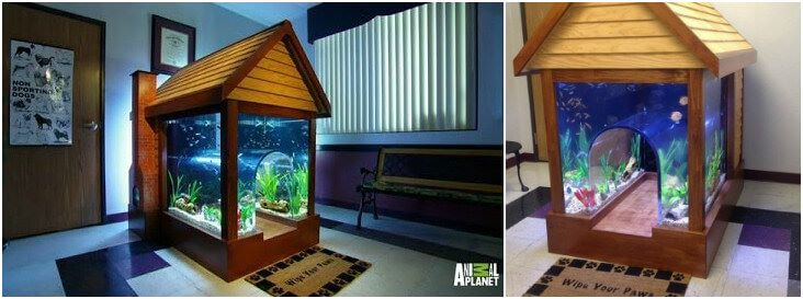 dog-house-aquarium