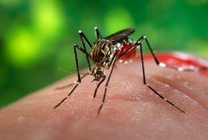 mosquito-the-most-dangerous-animal-on-planet
