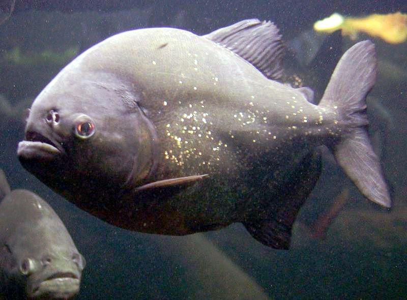 10 Of The Most Dangerous Freshwater Fish