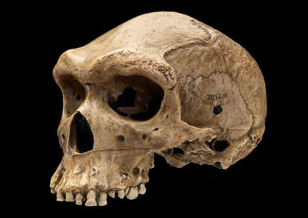 Old-Skull-With-Bullet-Hole-2
