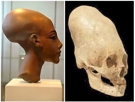 skulls of early Egyptian people