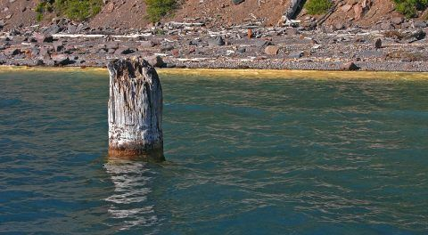 Beyond Science: Mysterious Piece Of Tree Trunk Has Been Floating Upright For 100 Years In Oregon