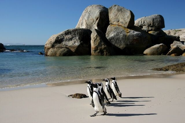 boulders-penguins1