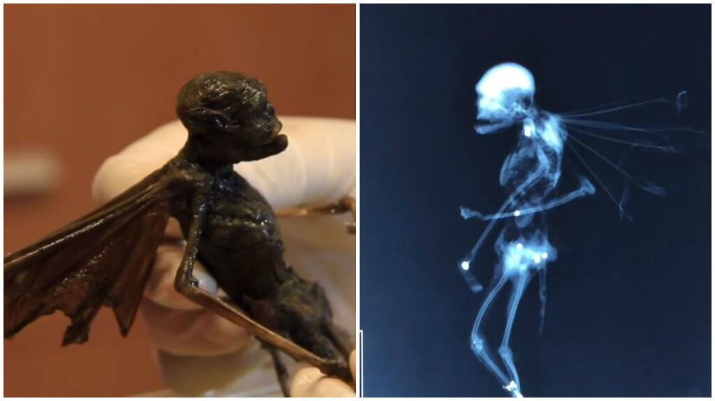 Mystery Creature: Fairy, Alien Or Demon Locust?