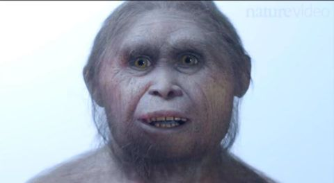Mata Menge Fossil- The Ancestor Of Hobbit