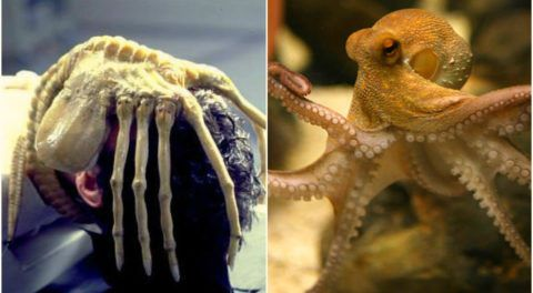 Octopus and Alien - Is There A Resemblance?