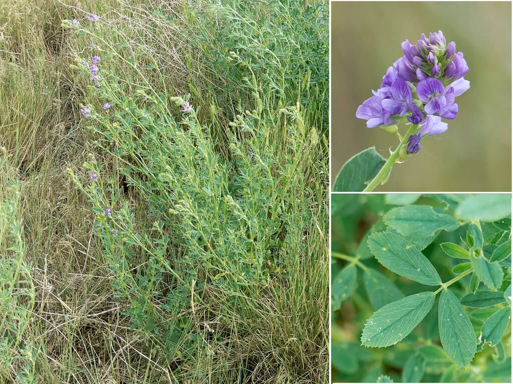 10 Of The Most Underrated Medicinal Plants In The World