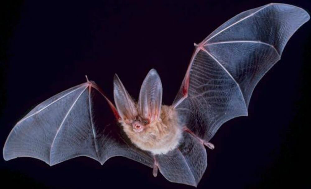 Vampire Bats Preying On Humans In Brazilian Forests
