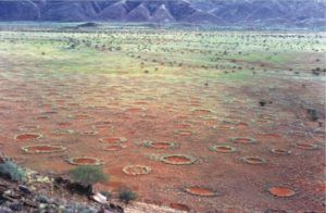 "Mystery Behind ""Fairy Circles"" Of The Namib Desert"