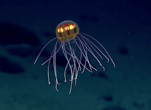 jBizarre Jellyfish That Looks Like UFO Is Spotted In The Depths Of Pacific Ocean