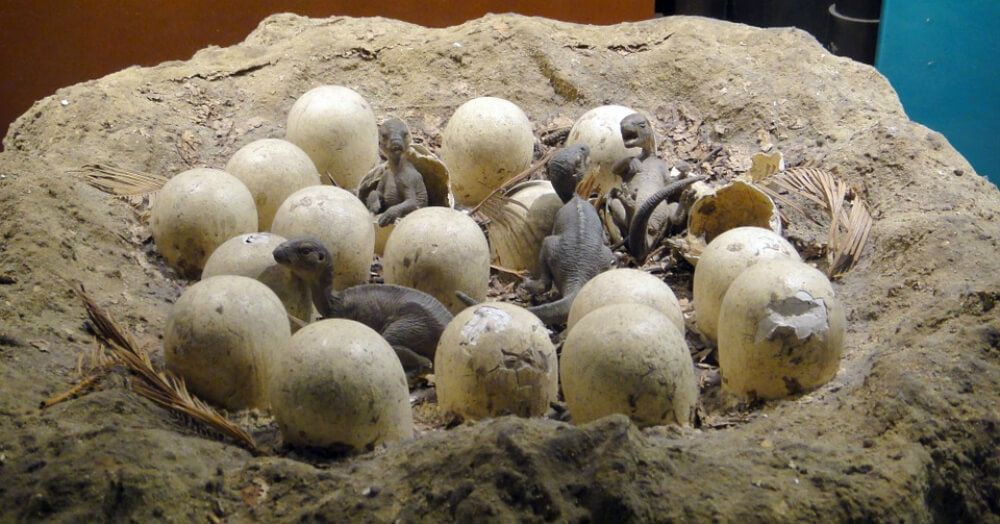 Dinosaurs Might Have Gone Extinct Because Their Eggs Took So Long To Hatch, New Study Says