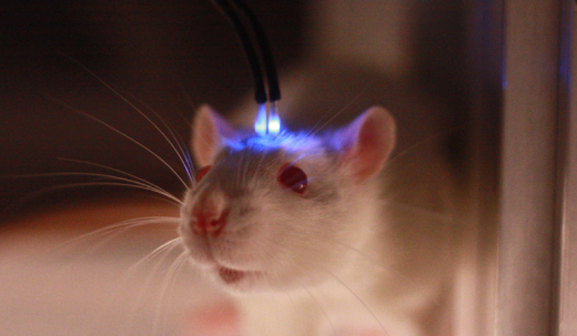 optogenetics-mouse