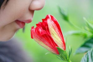 How Does The Loss Of Smell Predict Diseases?