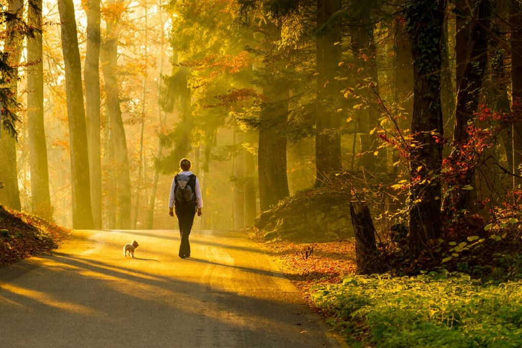 Person walking on trail in sunlit woods with a little dog