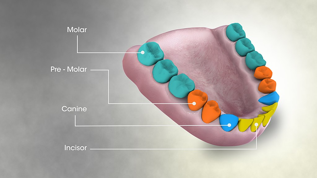 Tooth Pain Is Associated With The Health Of Your Organs