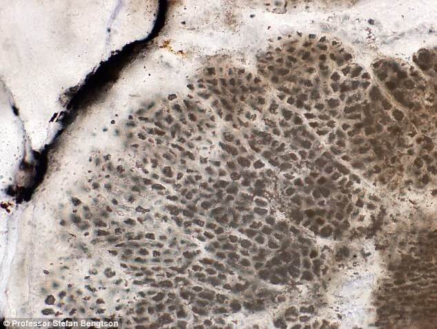 Fossils Dating Back 1.6 Bln Years May Be Oldest-Known Plants