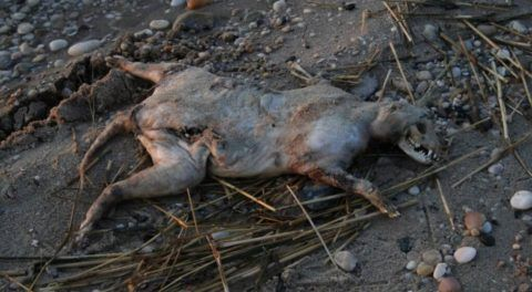 10 Of The Most Fascinating Globsters And Sea Carcasses