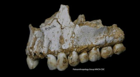 Neanderthal Used 'Aspirin' 50,000 Years Before Its Invention