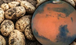 Scientists Successfully Grow Potato In Mars Simulating Climate