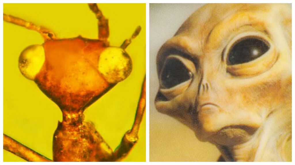 100-Million-Year-Old 'Alien' Insect Discovered Trapped In Amber