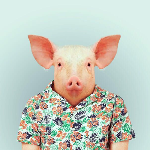 yago-partal-animals-clothes-4