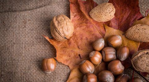 Eating Tree Nuts Reduces The Risk Of Dying From Bowel Cancer