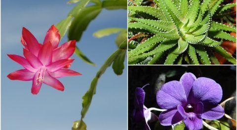5 Plants That Produce Oxygen Even During The Night