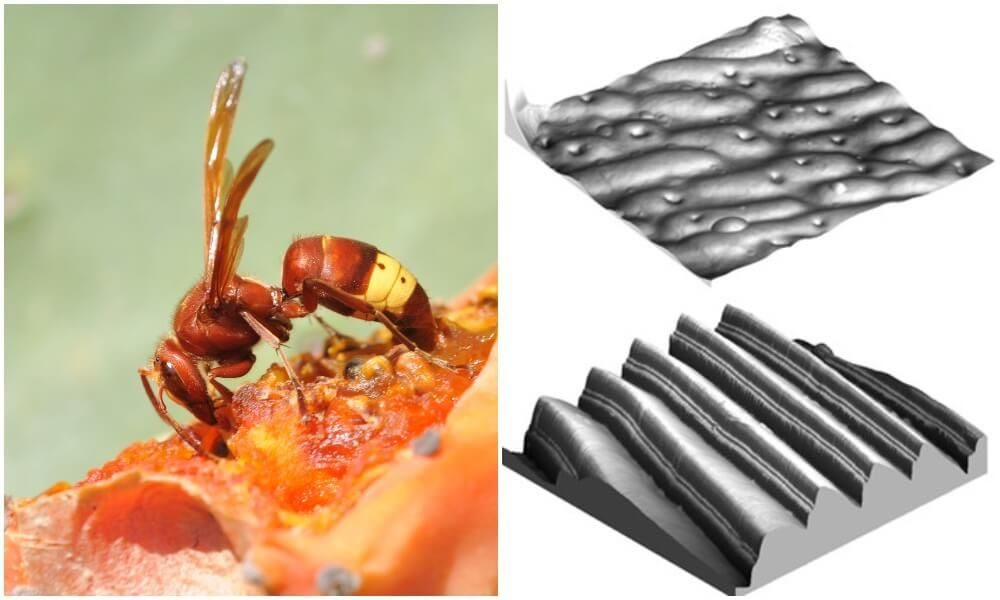 7 Of The Most Amazing Ways Animals Use Nanotechnology