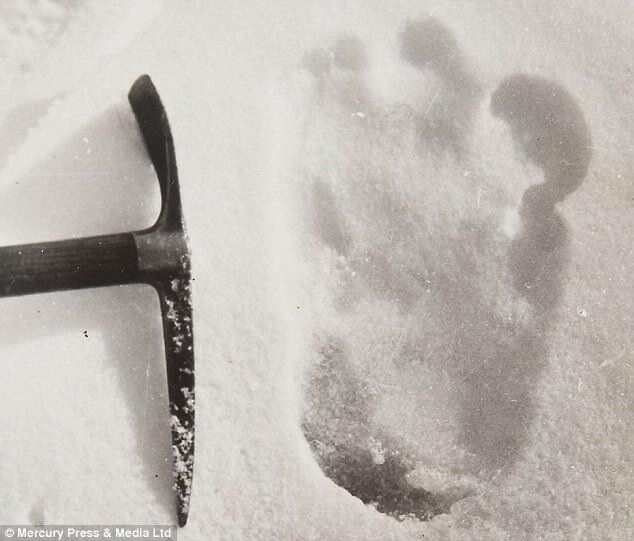 Does The Yeti Exists? Scientists Use DNA Evidence To Solve The Mystery