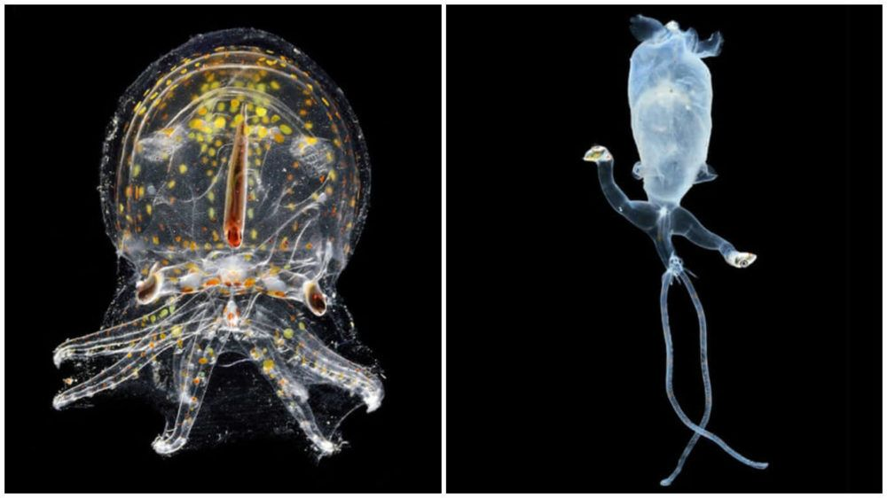 Aliens Of The Deep: Weird Creatures Captured Thousands Of Feet Underwater