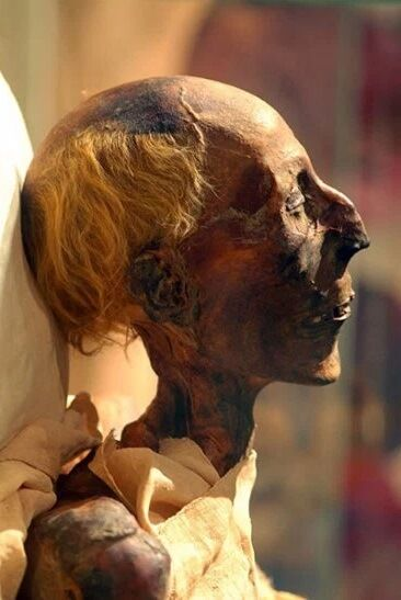 ramesses_ii_mummy_in_profile_-colored_picture-1
